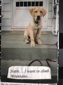 Puppy Quinn atop cement stairs with a handwritten  				caption: Stairs…I want to Climb Mountains!